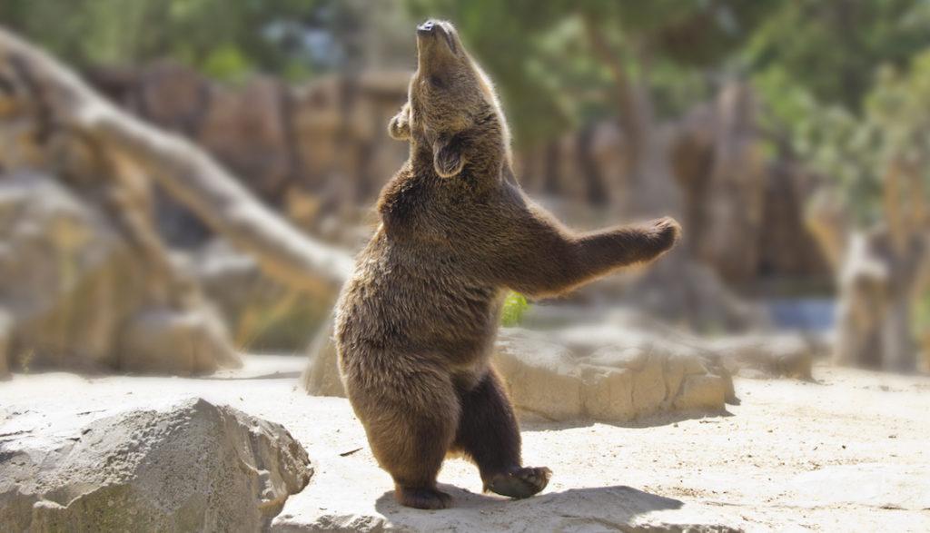 bear pic Dancing